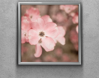 Nature Photograph - Pink Dogwood Picture - Spring Flowers - Soft Pink Photo Art - Baby Girl Nursery Decor - Girl Bedroom - 5x5, 8x8, 10x10