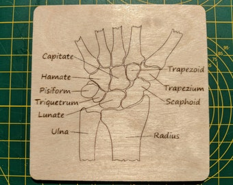 Bones of the wrist (carpals) coaster