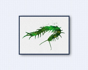 Centipede Watercolor Poster