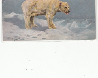 Beautiful Polar Bear Standing In A Pastel Arctic Setting-Antiquue Postcard