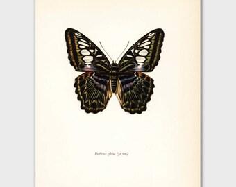 """Weinlese-Schmetterlings-Print, 1960er Jahre Wandkunst """"Clipper Admiral"""" Nr. 98-1"""