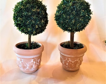 Miniature Pair of Topiary Trees in Terracotta Pots