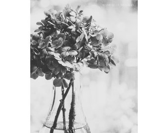 Still Life Photography Black and White Hydrangea Art 8x10 Print Nature Photo Dreamy Photography Rustic Decor Dark Flower Botanical Floral