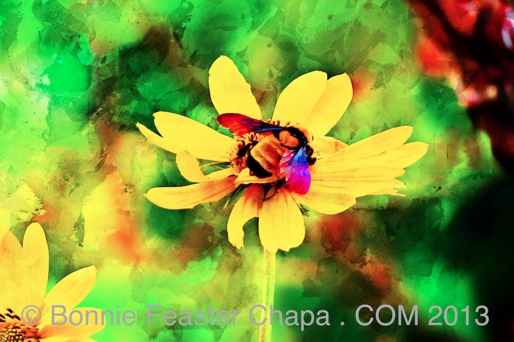 Bumble Bee Yellow Flower Lost Maples Texas State Park Wall Art ...