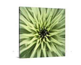 Desert Agave Art, Southwest Nature Photography, Green Agave Picture, Desert Botanical Art, Desert Organic Art, Arizona Gift, Agave Picture