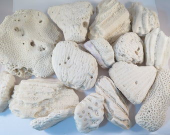 Natural White Coral, 4 Lbs, 16 pieces #136C