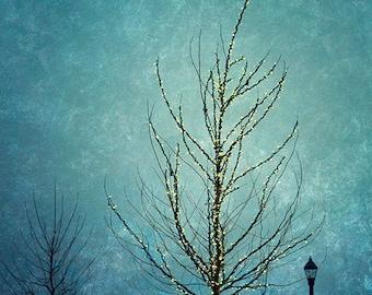 Tree Photography, Nature Photograph, Sparkle Fairy Lights, Turquoise Blue Art, Aqua, Teal, Streetlamp, Winter Night Sky Photo - Twinkle Tree
