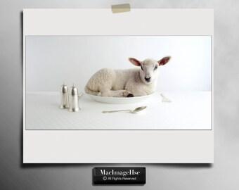 Baby Lamb Photograph , Cute Farm Animal , Little Lamb