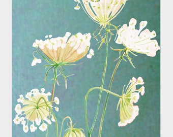 Print:  Queen Anne's Lace on Teal