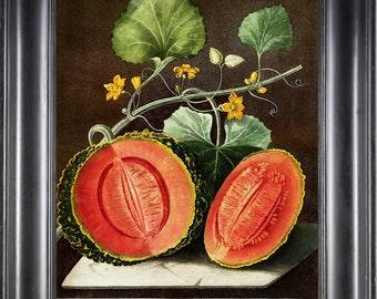 FRUIT PRINT Melon 8X10 Botanical Art Print 13 Antique Brookshaw Beautiful Botanical Print Natural History Interior Design to Frame