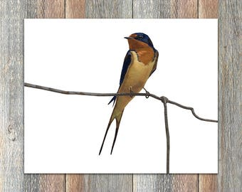 Barn Swallow Bird Print