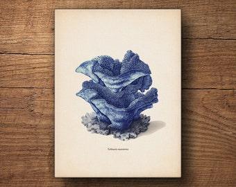 Coastal Print on Canvas, Blue Coral Print, Nautical Decor, Beach Wall Art, Coastal Decor Print, Coastal Print, Coastal Art, Coastal Decor