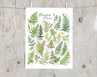 Print Ferns of Quebec | Poster botanical paintings, Poster fern l Watercolor plants Illustration |