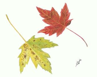 "Maple Leaves Autumn Print 5"" x 7"""