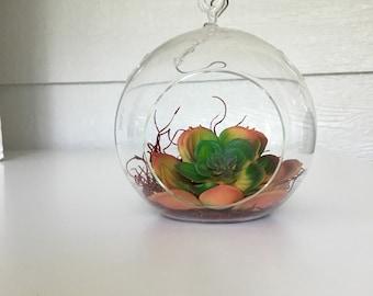 Hanging Succulent Terrarium(34)