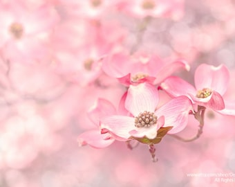 Spring Pink Blossom-Dogwood Flower Petals Wall Art Soft Dreamy Bokeh Fine Art Nature Photography Print -Home Decor Living Room Girls Bedroom