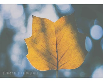 Leaf Photograph, 5x7 Print, Autumn Leaf Print, Dreamy Photography, Tulip Poplar Print, Nature Photography, Fall Leaf Photo, Blue and Gold