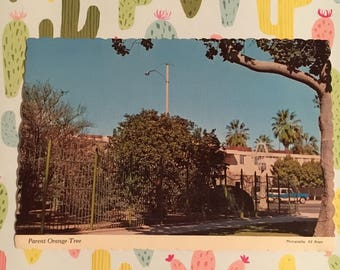 Riverside, CA - 1950s postcard, Parent Naval Orange Tree