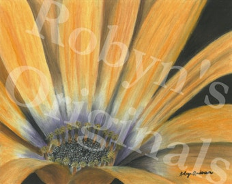 Orange Daisy Art Print
