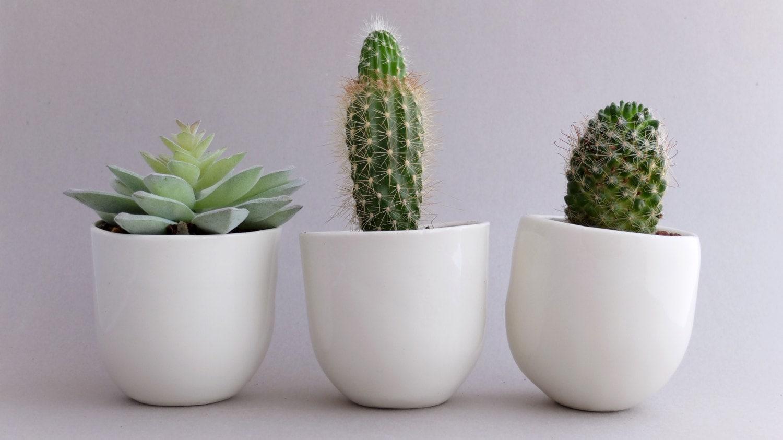 🔎zoom. flower pot planter set desk plant pot indoor planter succulent