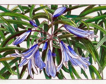 Agapanthus flower, Original watercolour painting