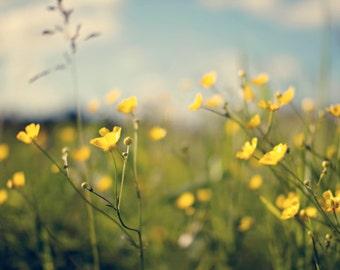 Summer Photography nature, citrine yellow buttercups, flowers, green, blue, romantic, soft, field, home decor - Fine Art Photography Print