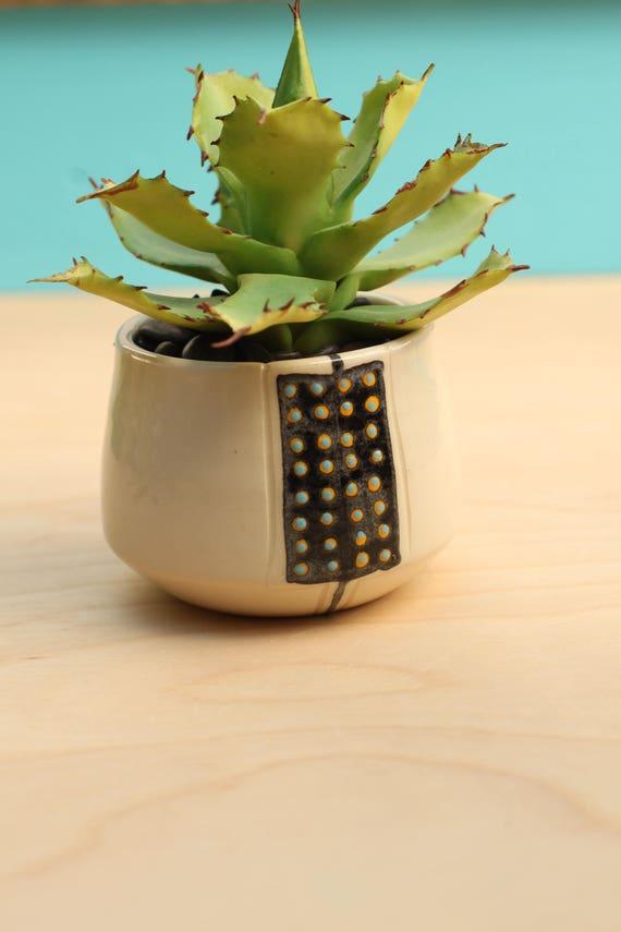 succulent plant pot