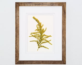 Pressed Flower Art, Goldenrod, 8x10, Pressed Botanical Art. Wildflower Art