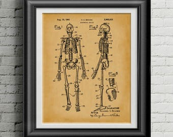 Anatomy Human Skeleton Poster * Biology Gifts * Doctor Gift for Doctor * Teacher Gifts * Doctor's Office Artwork * Biology Teacher PP 9062