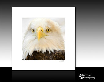 Bald Eagle Photography, matted print, fits 12x12 frame