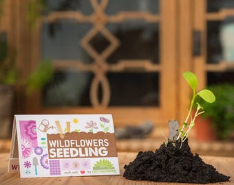 "Seedling ""Wildflowers"" - seed sticks in a matchbook-like packaging. The flower meadow for your pocket"