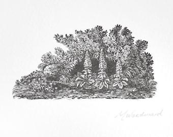 Foxglove Wood Engraving Original Print