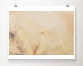 gold dandelion photograph gold dandelion print gold flower photograph gold flower print botanical print summer photograph