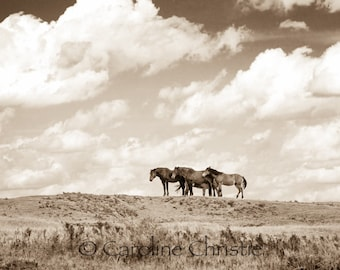 """Horse print,Wild Horse Photo, Horse Photography .Title """"Big Sky Country"""""""