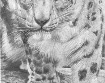 Snow Leopard Animal Print Graphite Pencil Drawing A4 and A3