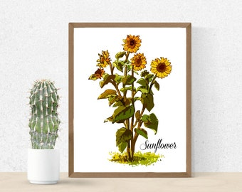 Vintage Sunflower Print - 8x10 or 16x20 - Museum Quality Paper and Ink