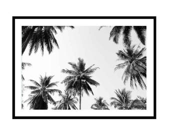 Palm Print, Black and White Palm Tree Photography Print, Palm Trees, Tropical Print, Coconut Palms
