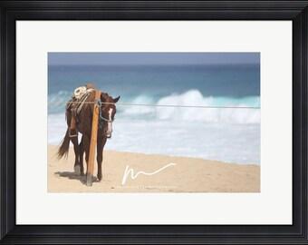New Cabo Beach Horse, Framed Print, Ready to Hang, Home Decor, Wall Art, Landscape Photography  Cabo San Lucas Mexico