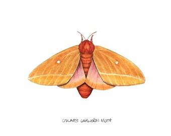 Oslar's Oakworm Moth (Anisota oslari)
