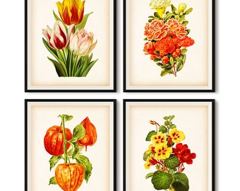 Botanical, Flower printable, Botanical print, Wall art vintage, Set of 4 prints, llustration set, Printable set, Tulip, 8x10, 11x14, JPG