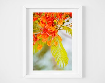Bright colorful floral art - Tropical decor - Orange nature wall art - Framed art - Photo gift mom - Vertical photo prints - Caribbean art