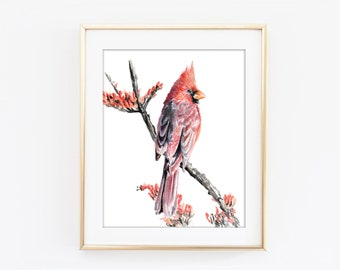 Cardinal Bird Watercolor Art Print, Common Cardinal Bird Painting, Redbird, Northern Cardinal Bird Art, Crimson Red Songbird W63