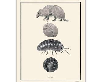 Natural Values print - Adapt - Armadillo - Nature Art - Inspirational - Ryan Berkley - Illustration - Wall Art - Scientific Illustration
