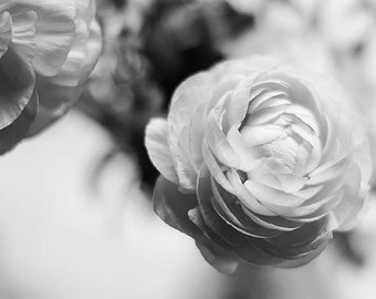 Black and White Ranunculus Photography, Art Print, Floral Wall Art, Black and White, Ranunculus Fine Art Photography Print, Gallery Wall Art