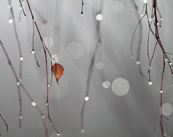 Big grey world punctured by a small orange leaf 8x10