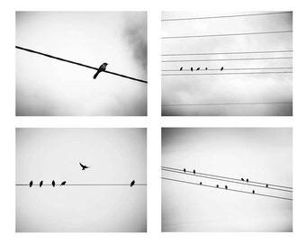 black and white photography birds set 8x10 8x12 set of 4 Fine art photography winter birds on a wire birds in flight nature photography gre