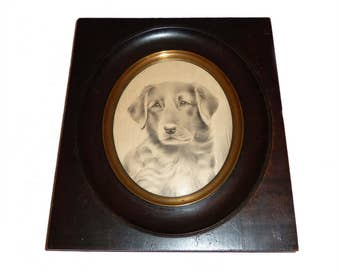 1910's Pencil Drawing Of A Young Labrador- Framed And Glazed