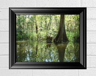 Printable Photograph Fine Art Cypress Swamp Print Louisiana Landscape Bayou Nature Wall Office Decor DIY Print PDF Jpeg PNG Instant Download