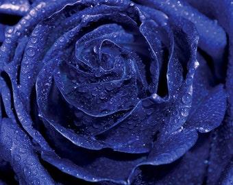 Blue Rose photo Digital Download Fine Art Photography flower macro water drops flower wall art blue decor