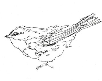 Bird Art - Warbler, Songbird, Line Drawing, Giclee Print, Pen Ink